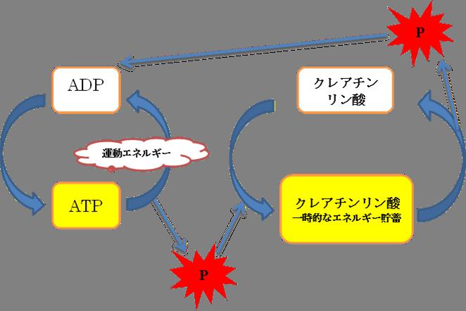 運動生理学<理論編> ~ATPの ... : カレンダー 2015 三月 : カレンダー