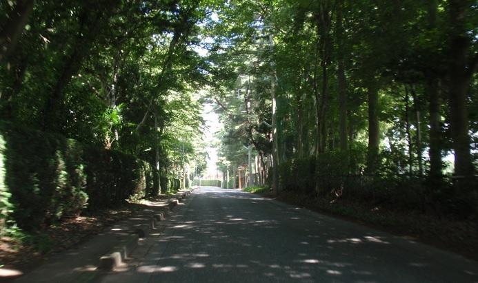 木陰の坂道